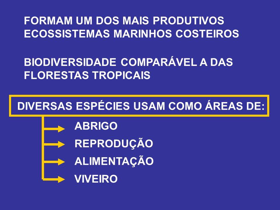 FORMAM UM DOS MAIS PRODUTIVOS ECOSSISTEMAS MARINHOS COSTEIROS