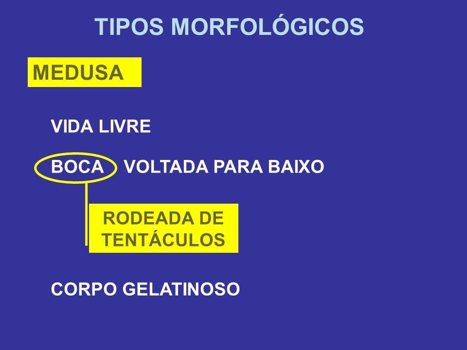 TIPOS MORFOLÓGICOS MEDUSA VIDA LIVRE BOCA VOLTADA PARA BAIXO