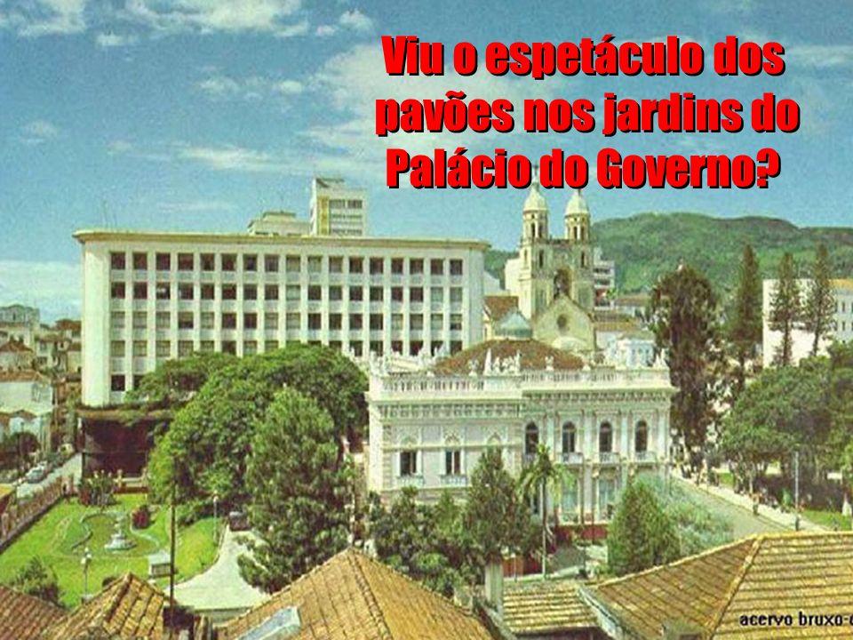 Viu o espetáculo dos pavões nos jardins do Palácio do Governo