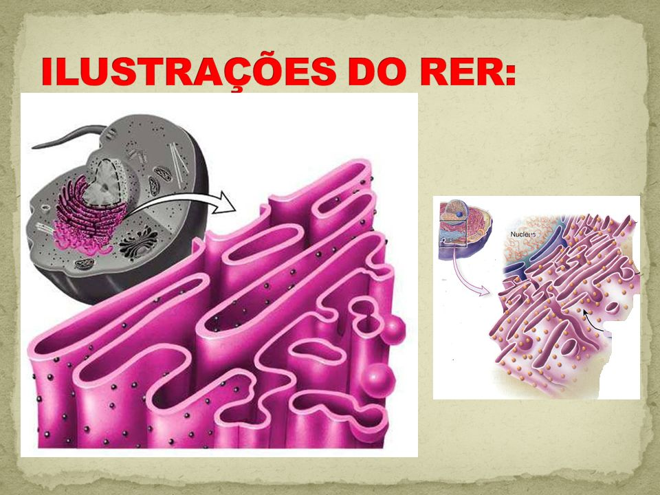 ILUSTRAÇÕES DO RER: