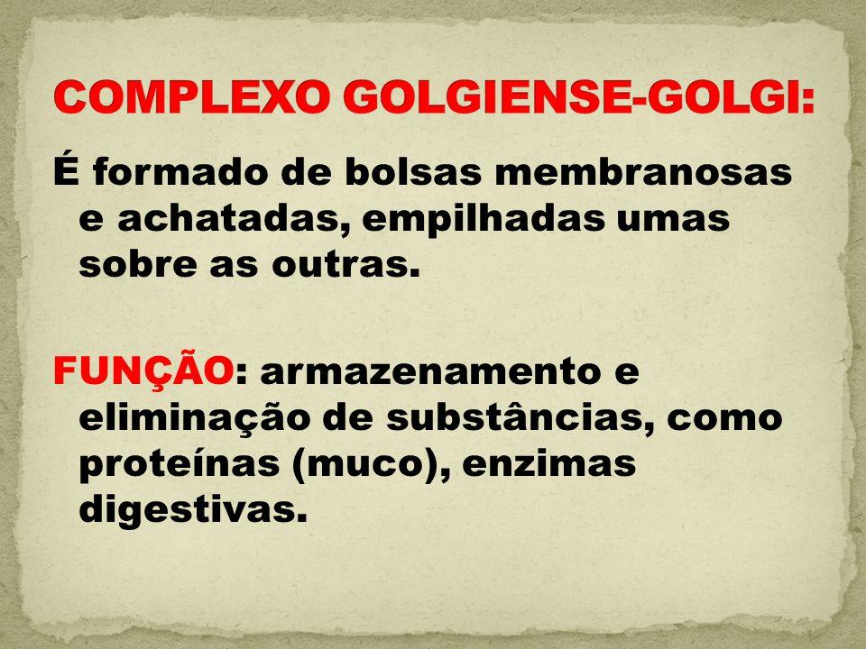 COMPLEXO GOLGIENSE-GOLGI: