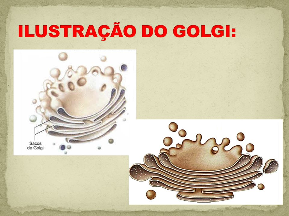 ILUSTRAÇÃO DO GOLGI: