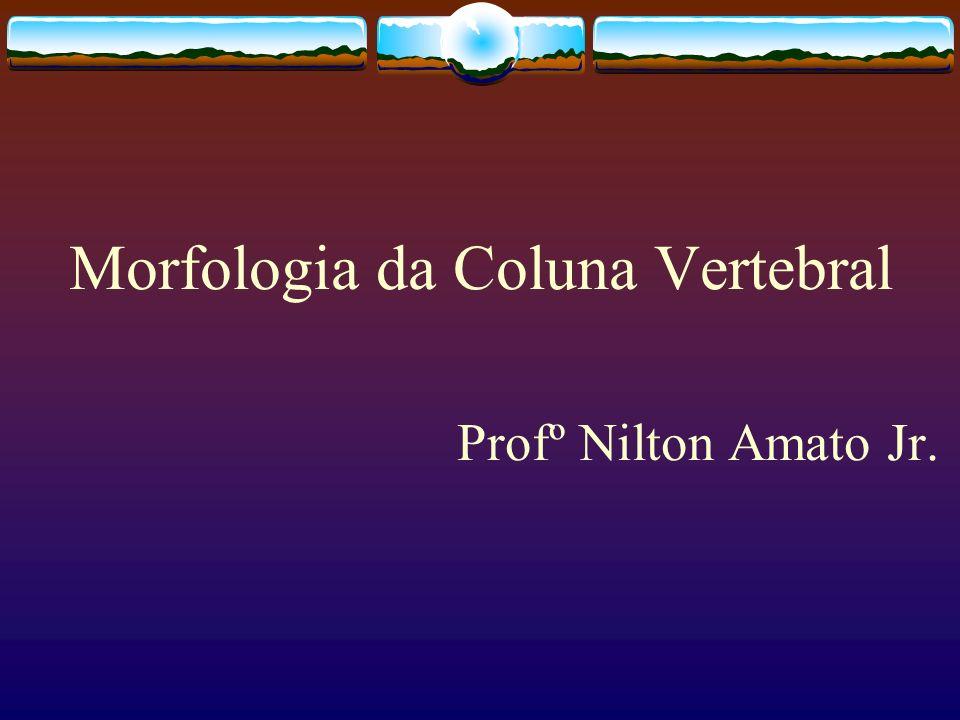 Morfologia da Coluna Vertebral