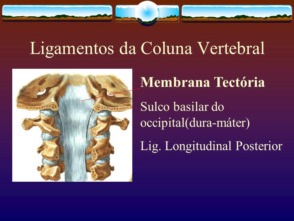 Ligamentos da Coluna Vertebral
