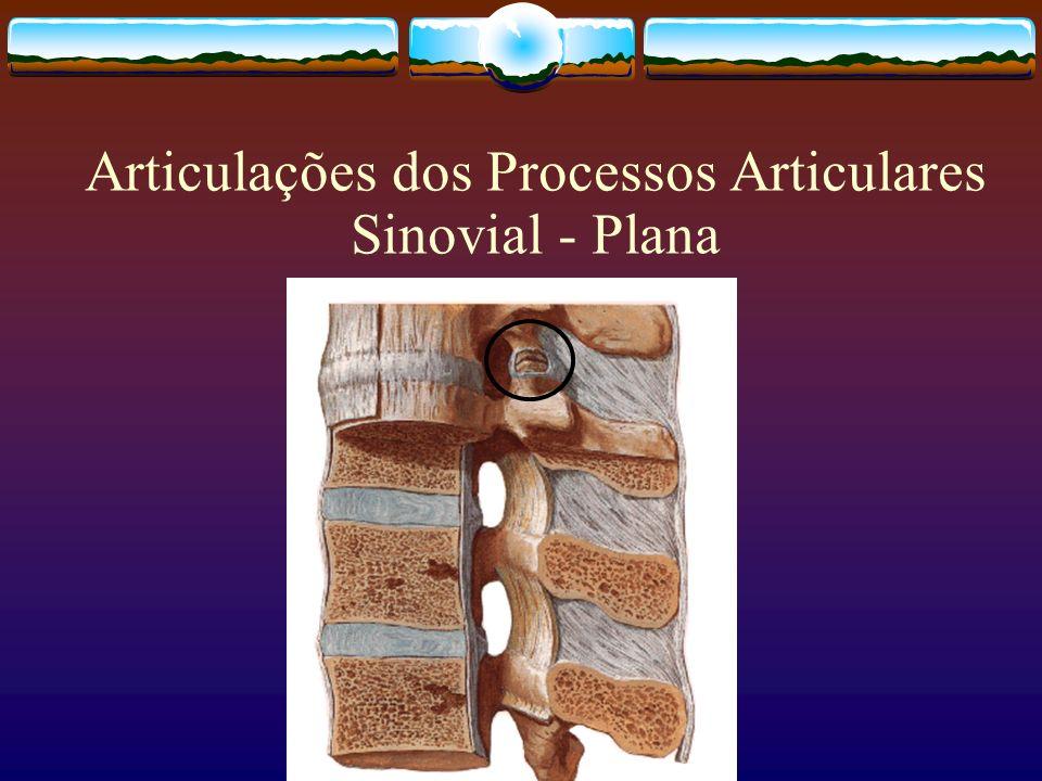 Articulações dos Processos Articulares Sinovial - Plana