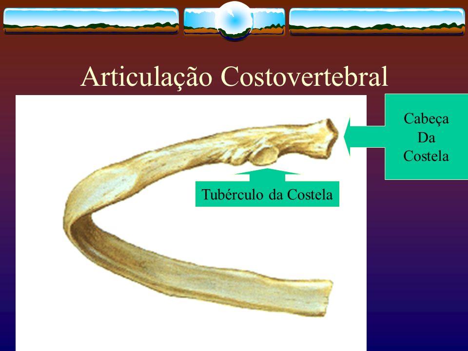 Articulação Costovertebral