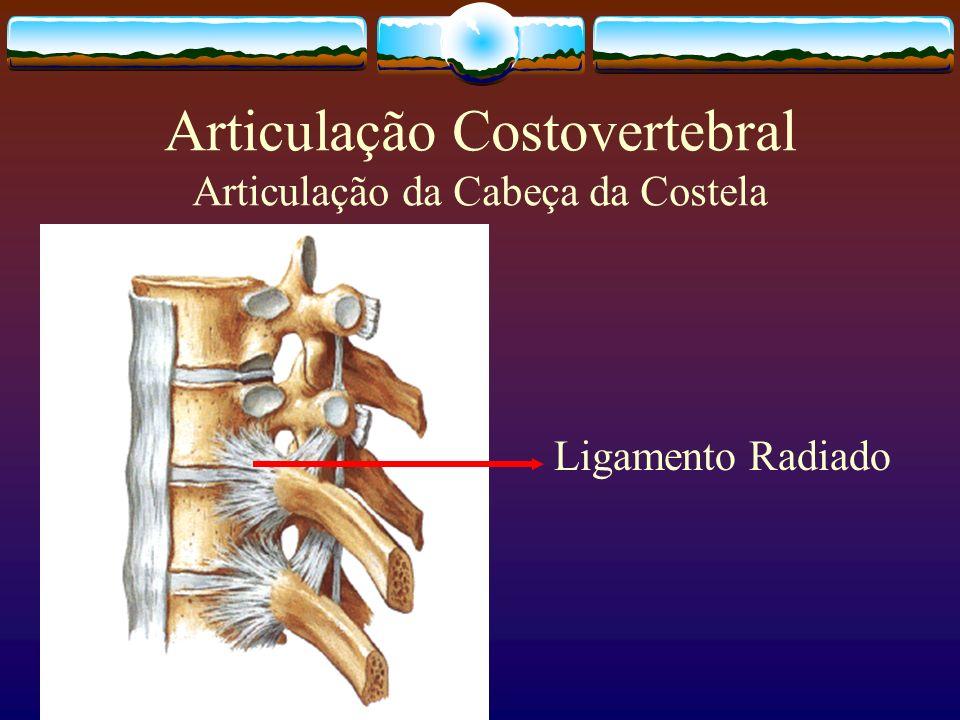 Articulação Costovertebral Articulação da Cabeça da Costela