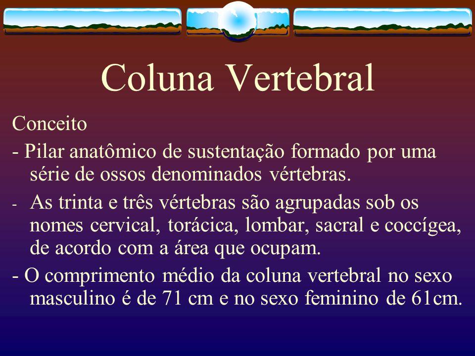 Coluna Vertebral Conceito
