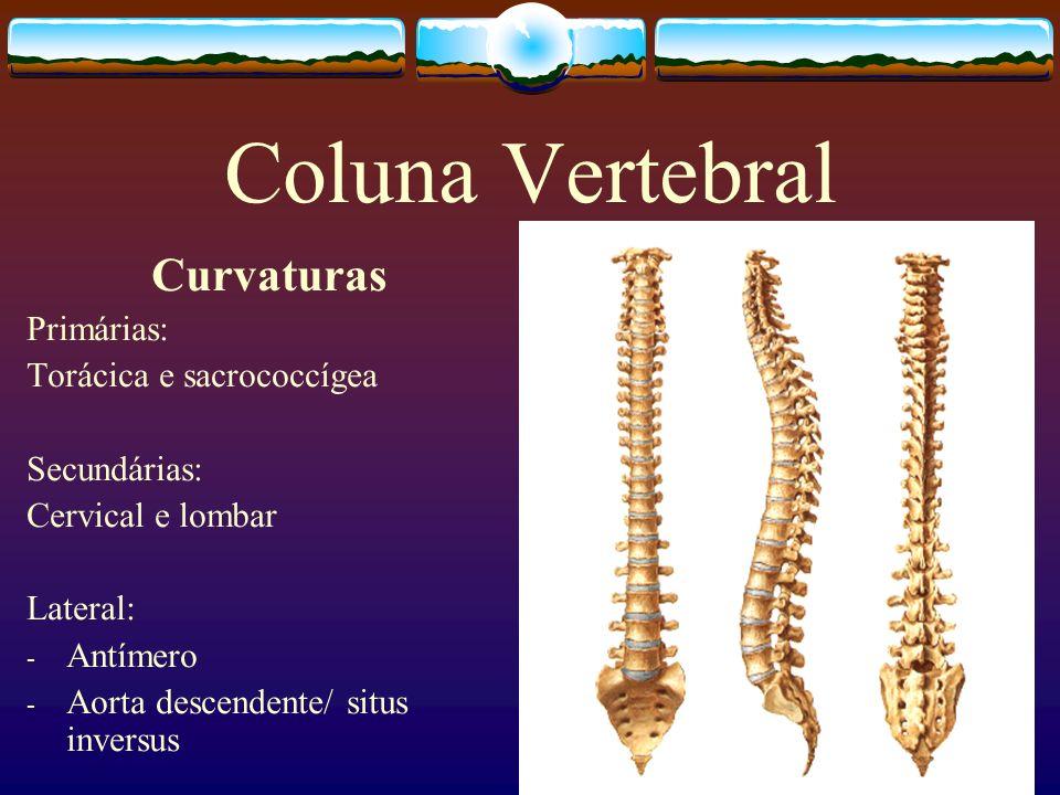 Coluna Vertebral Curvaturas Primárias: Torácica e sacrococcígea