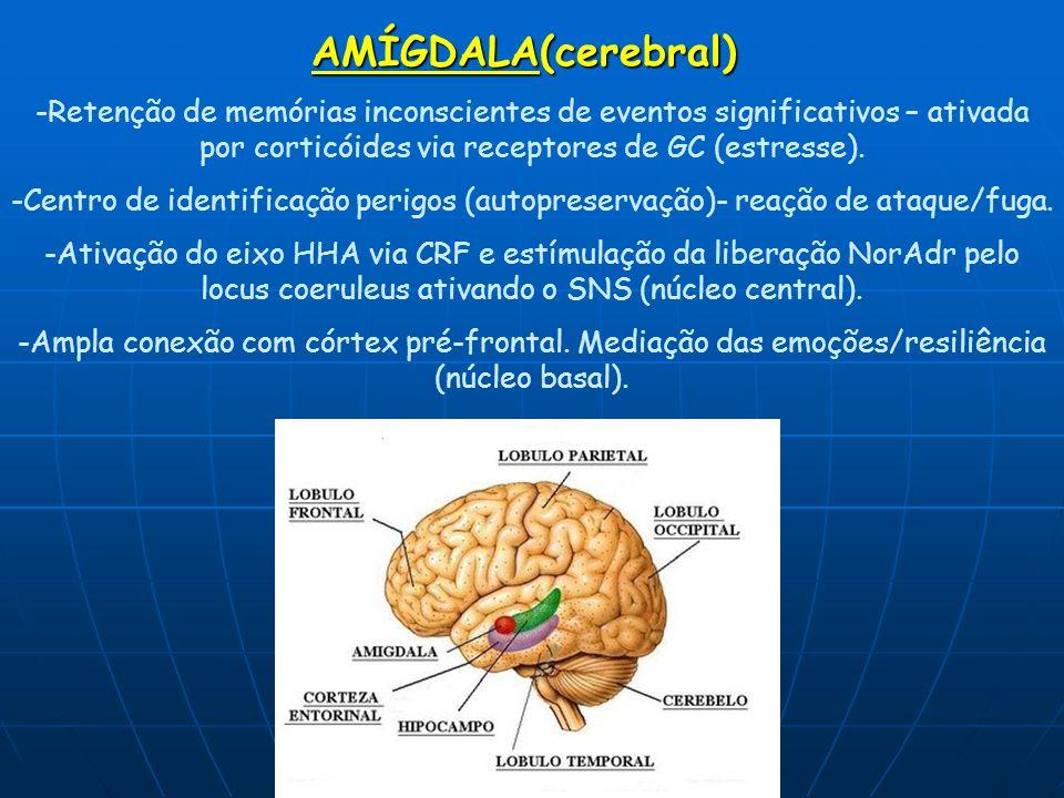 AMÍGDALA(cerebral) -Retenção de memórias inconscientes de eventos significativos – ativada por corticóides via receptores de GC (estresse).