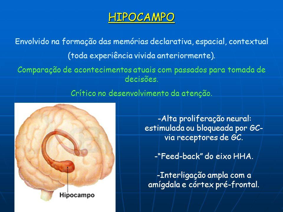 HIPOCAMPOEnvolvido na formação das memórias declarativa, espacial, contextual. (toda experiência vivida anteriormente).