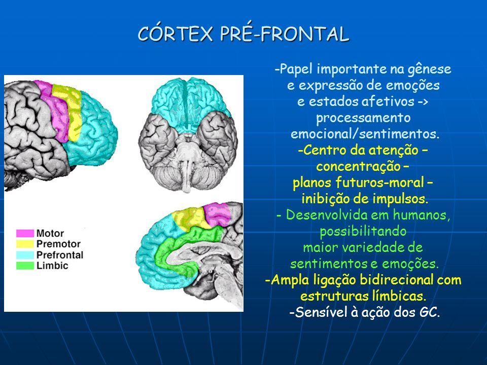 CÓRTEX PRÉ-FRONTAL -Papel importante na gênese e expressão de emoções