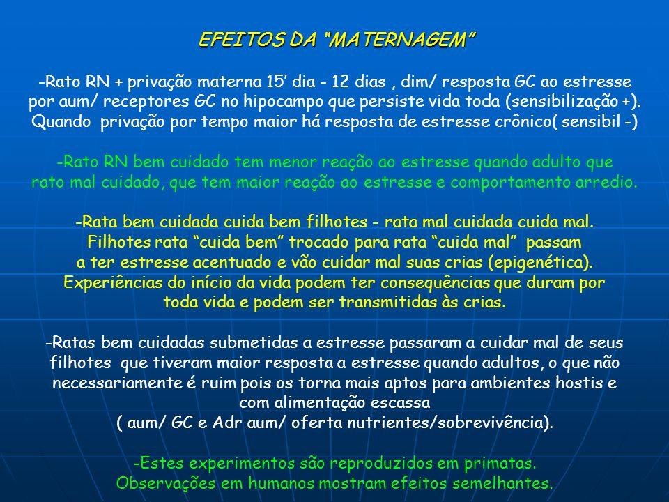 EFEITOS DA MATERNAGEM