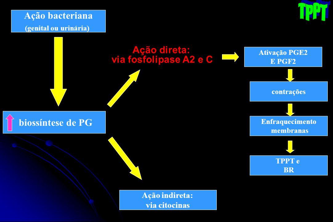 TPPT Ação bacteriana Ação direta: via fosfolipase A2 e C