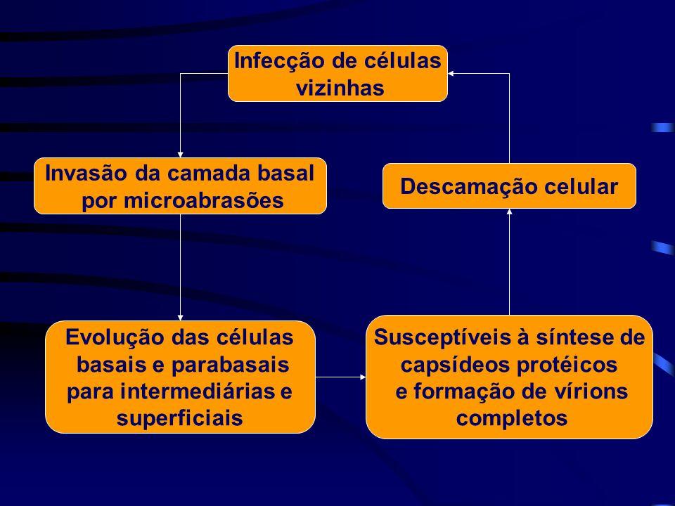 Invasão da camada basal Susceptíveis à síntese de