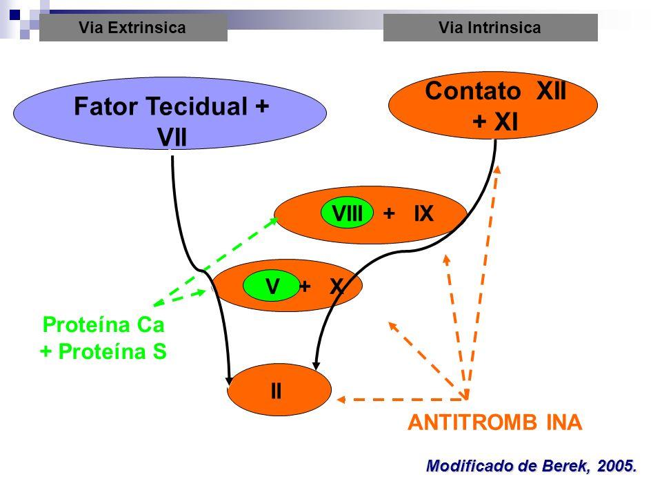 Proteína Ca + Proteína S