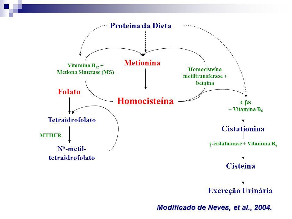 Homocisteína Proteína da Dieta Metionina Folato Cistationina Cisteína