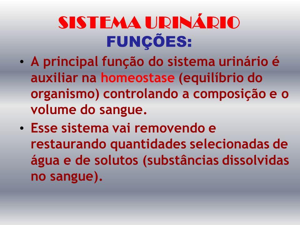 SISTEMA URINÁRIO FUNÇÕES: