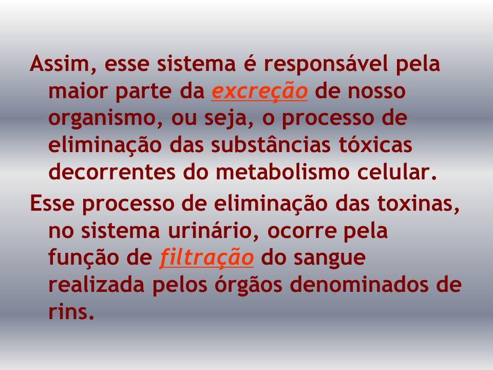 Assim, esse sistema é responsável pela maior parte da excreção de nosso organismo, ou seja, o processo de eliminação das substâncias tóxicas decorrentes do metabolismo celular.