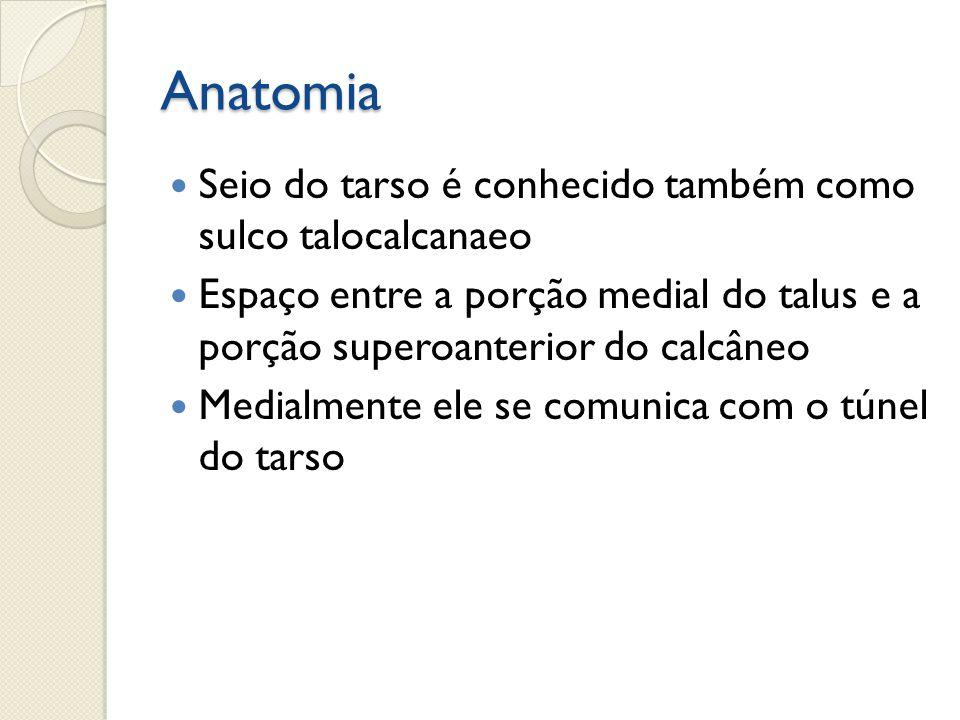 Fantástico Anatomía Del Túnel Tarsiano Fotos - Imágenes de Anatomía ...