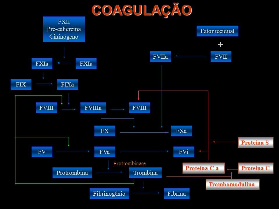 COAGULAÇÃO + FXII Pré-calicreína Cininógeno Fator tecidual FVIIa FVII
