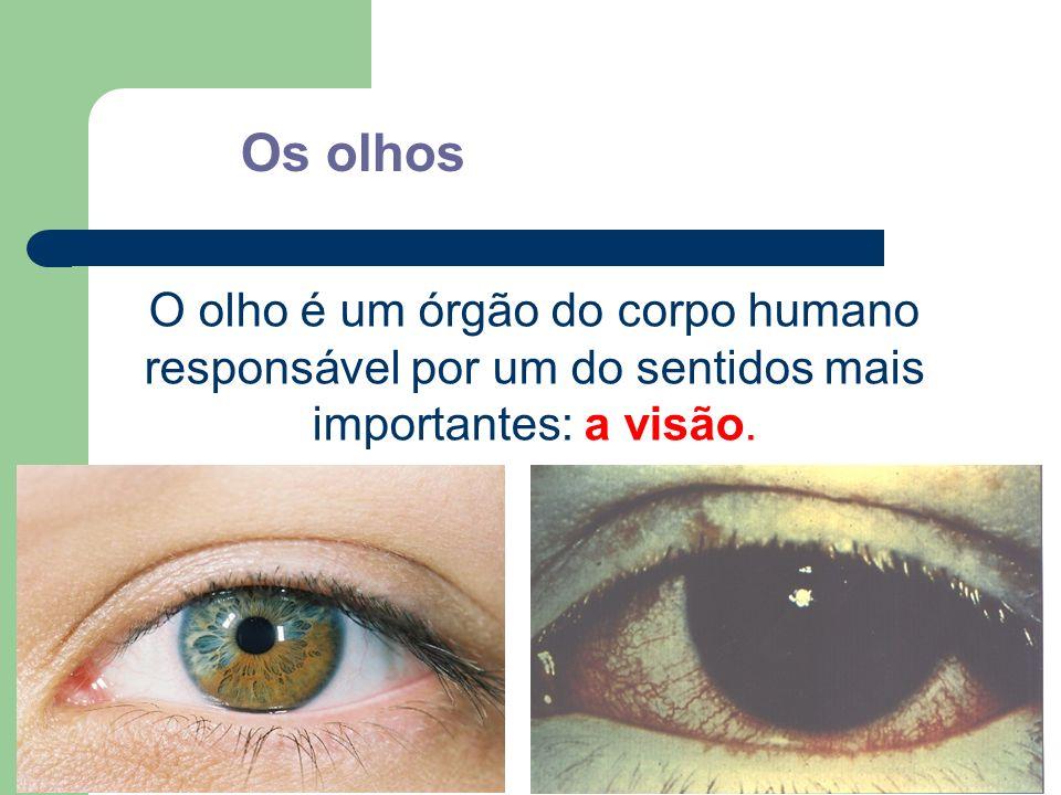 Os olhos O olho é um órgão do corpo humano responsável por um do sentidos mais importantes: a visão.