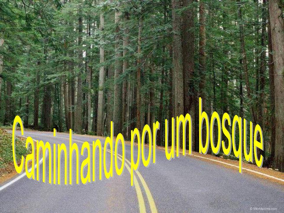 Caminhando por um bosque