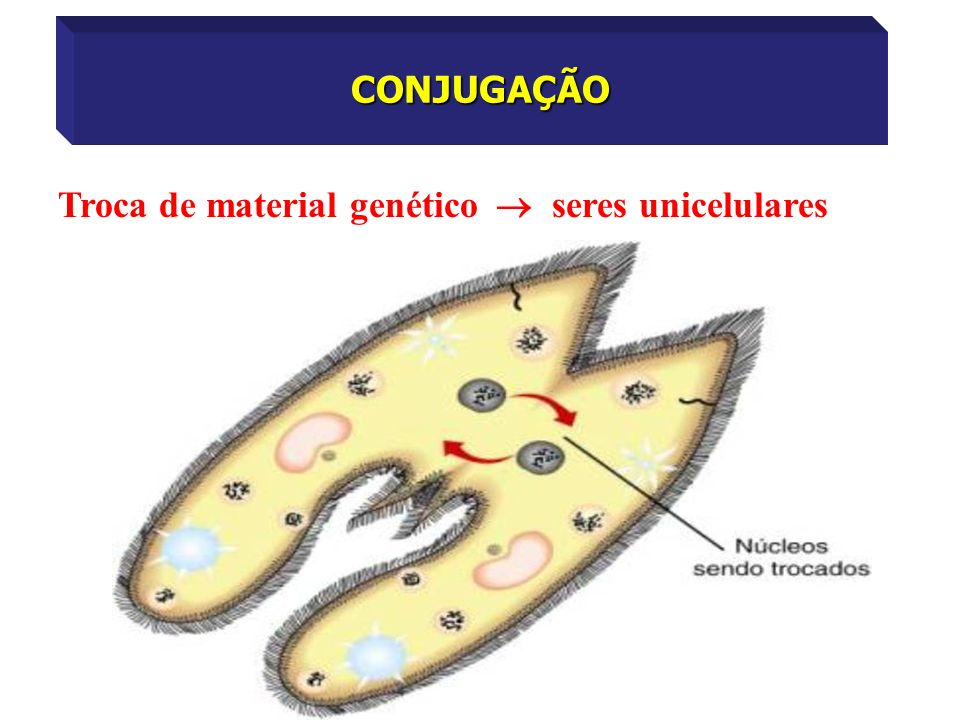 CONJUGAÇÃO Troca de material genético  seres unicelulares