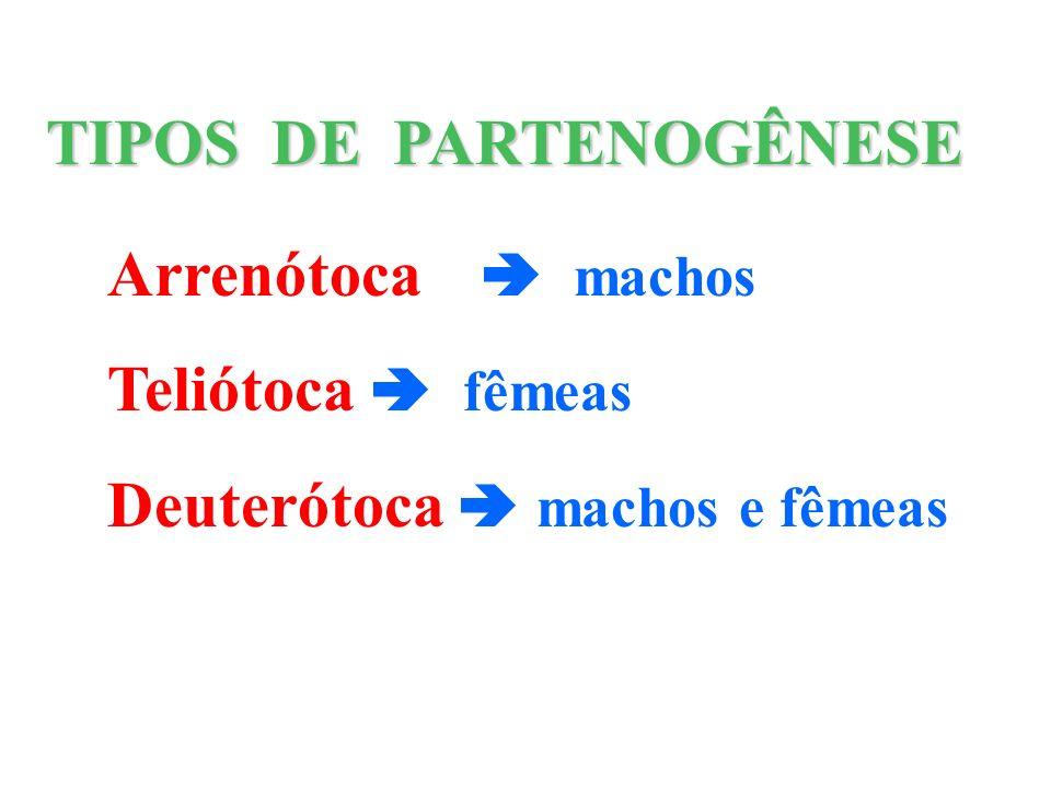 TIPOS DE PARTENOGÊNESE