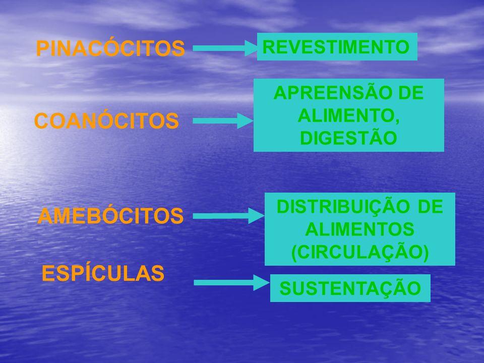 APREENSÃO DE ALIMENTO, DIGESTÃO DISTRIBUIÇÃO DE ALIMENTOS (CIRCULAÇÃO)