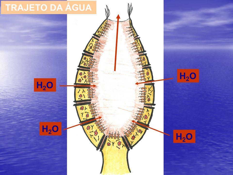 TRAJETO DA ÁGUA H2O H2O H2O H2O