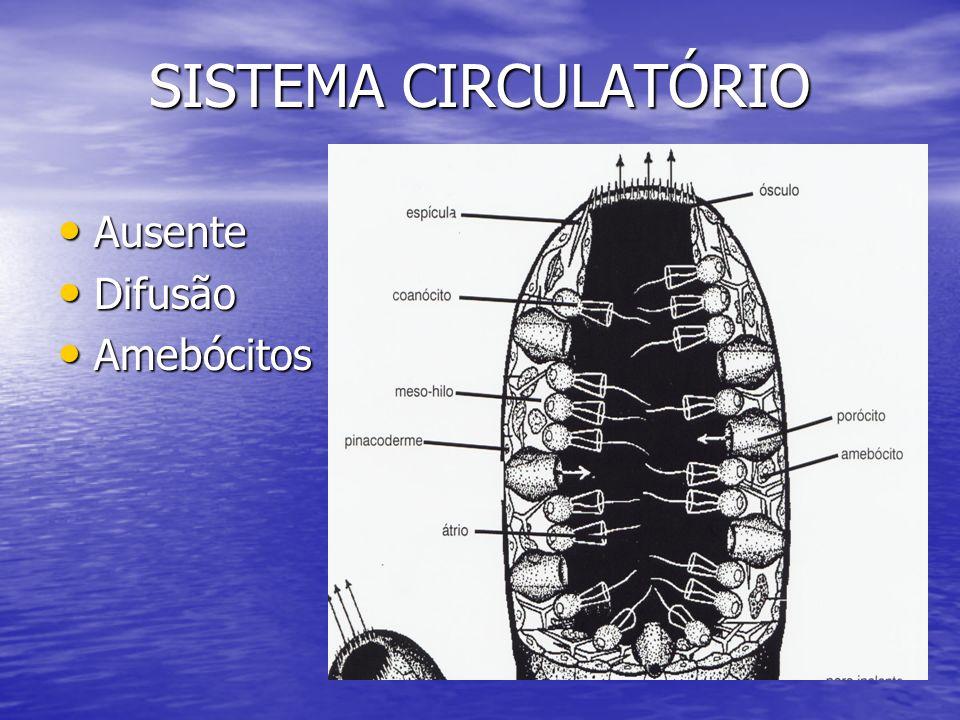 SISTEMA CIRCULATÓRIO Ausente Difusão Amebócitos