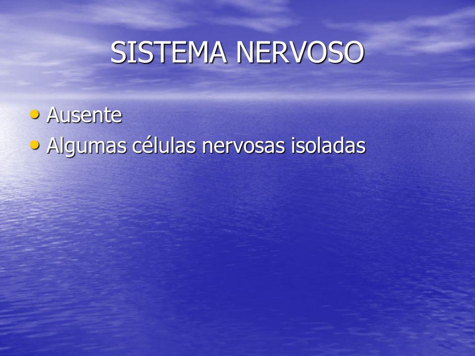 SISTEMA NERVOSO Ausente Algumas células nervosas isoladas