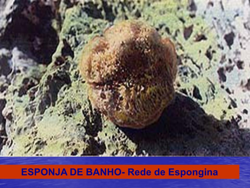 ESPONJA DE BANHO- Rede de Espongina