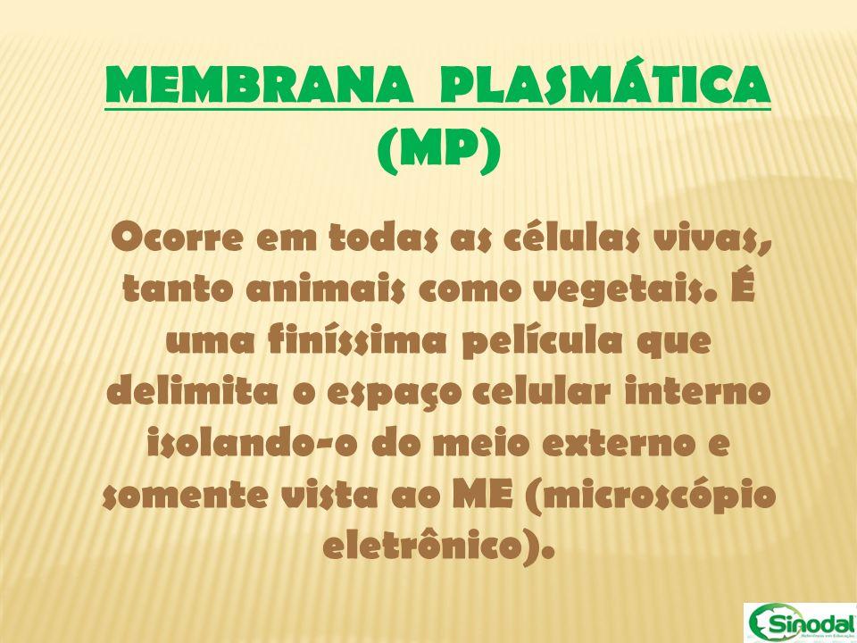 MEMBRANA PLASMÁTICA (MP)
