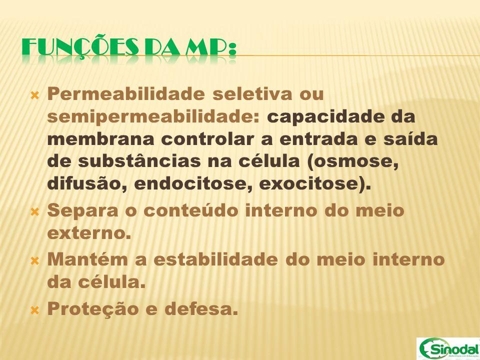 FUNÇÕES DA MP: