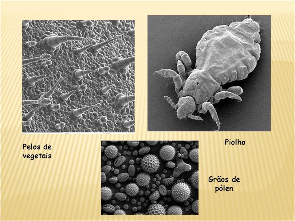 Piolho Pelos de vegetais Grãos de pólen