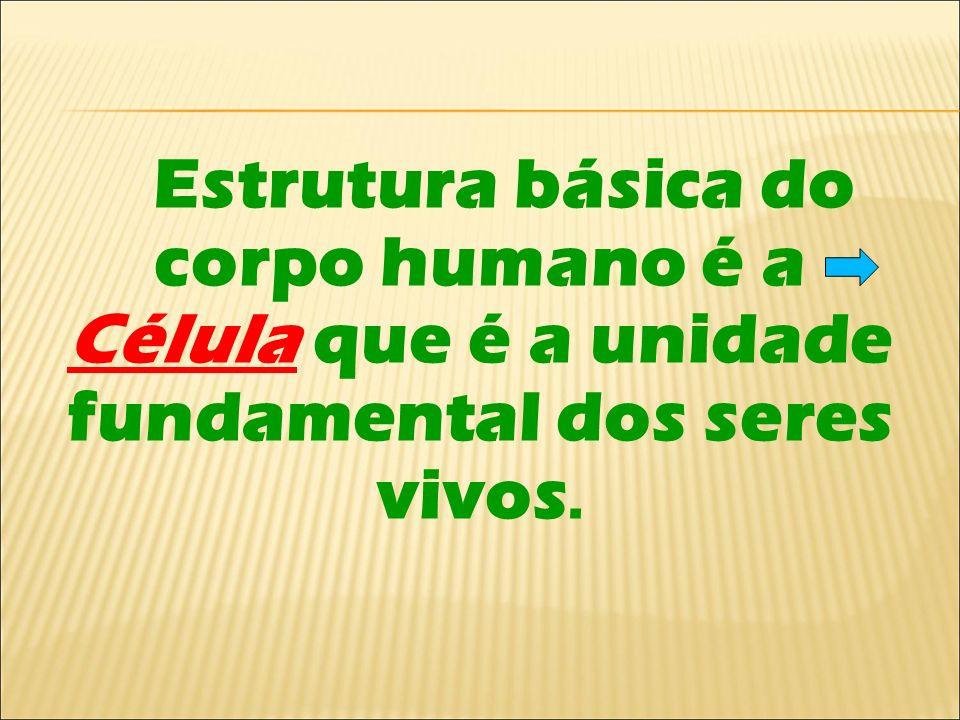 Estrutura básica do corpo humano é a Célula que é a unidade fundamental dos seres vivos.