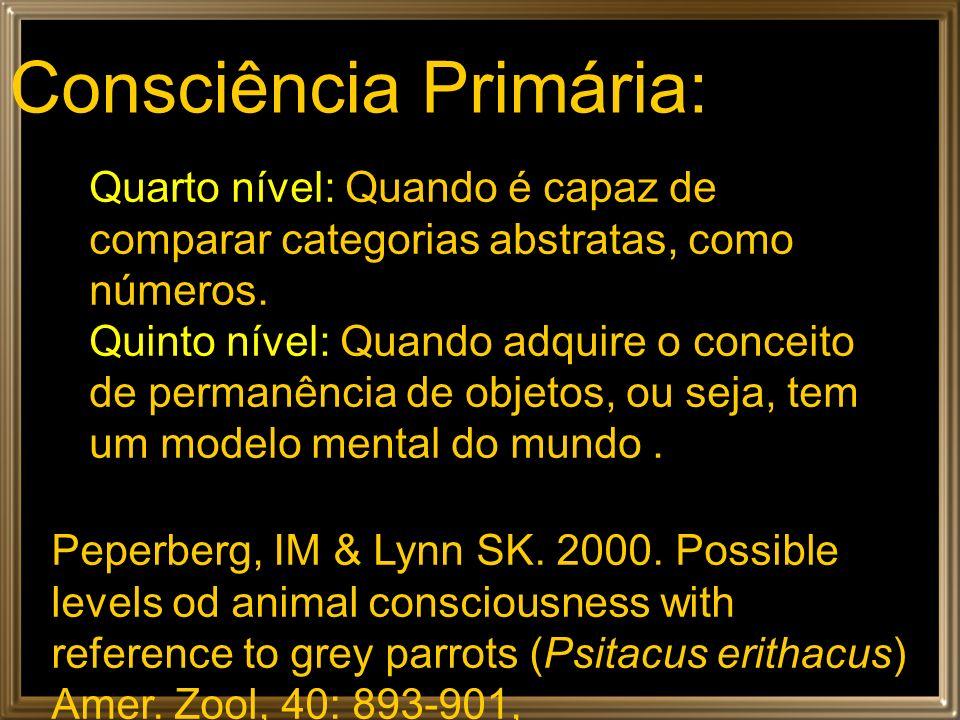 Consciência Primária:
