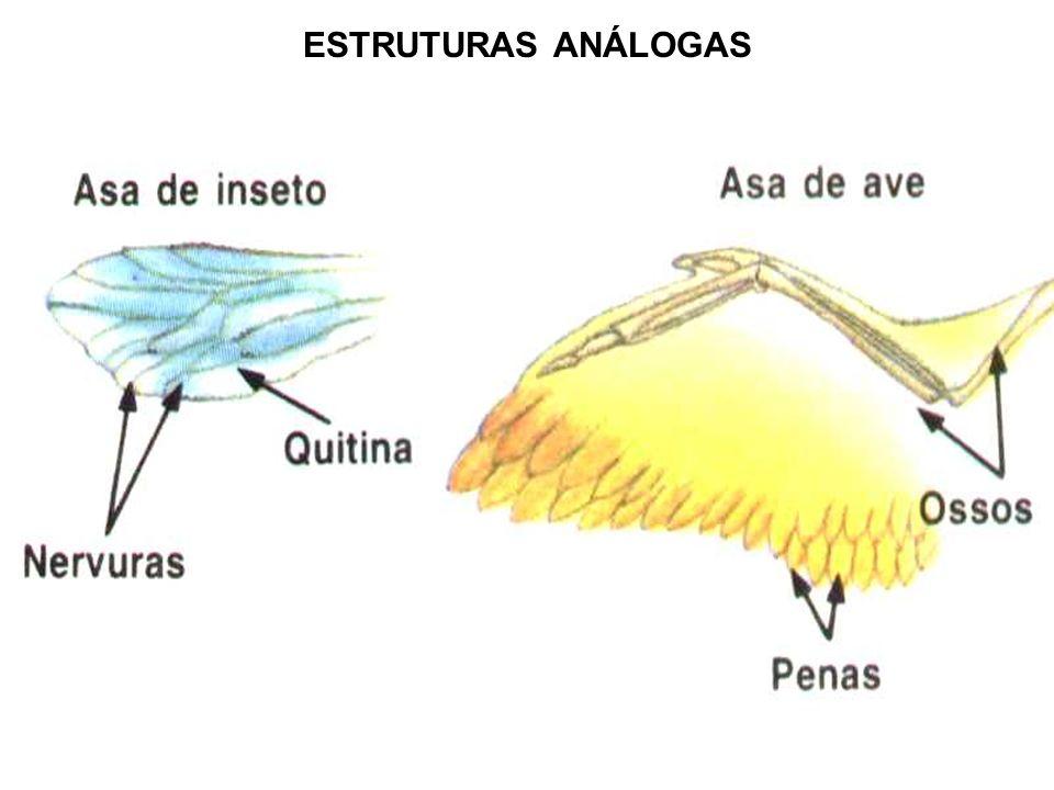 ESTRUTURAS ANÁLOGAS