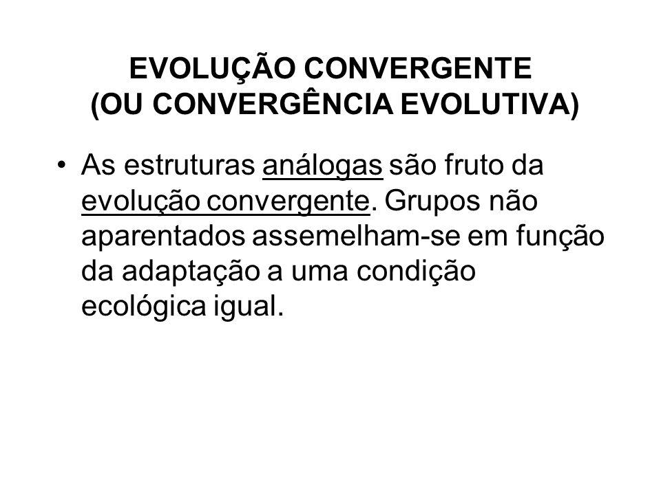 EVOLUÇÃO CONVERGENTE (OU CONVERGÊNCIA EVOLUTIVA)