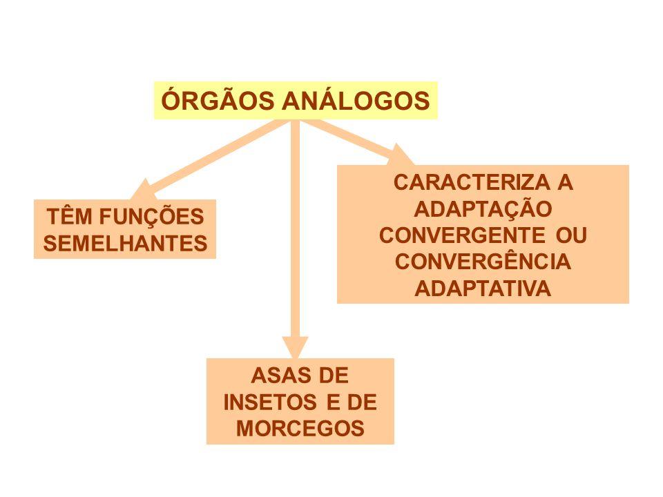 ANALOGIA ÓRGÃOS ANÁLOGOS