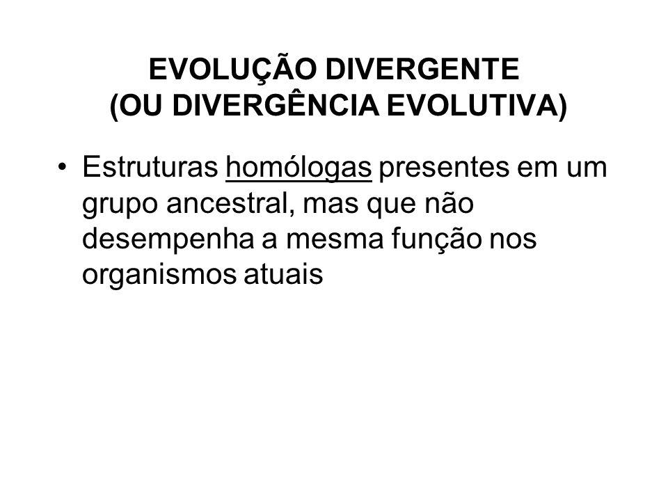 EVOLUÇÃO DIVERGENTE (OU DIVERGÊNCIA EVOLUTIVA)