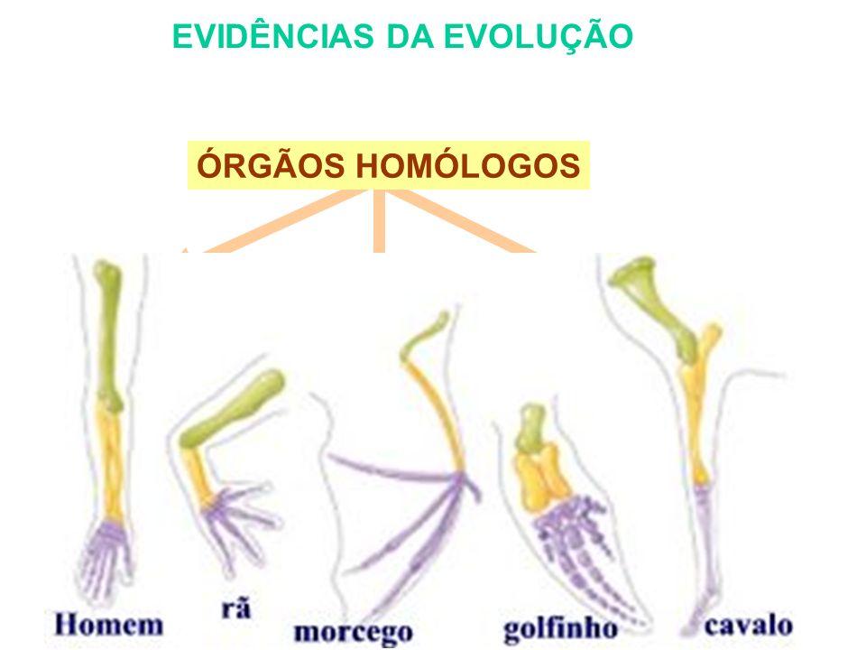 EVIDÊNCIAS DA EVOLUÇÃO BRAÇO HUMANO E ASAS DE AVES