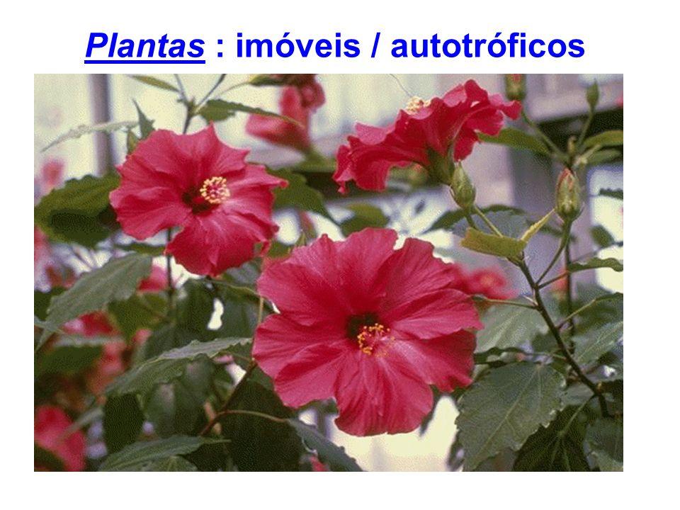Plantas : imóveis / autotróficos