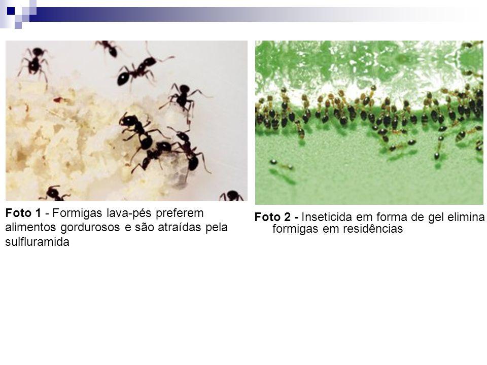 Foto 1 - Formigas lava-pés preferem