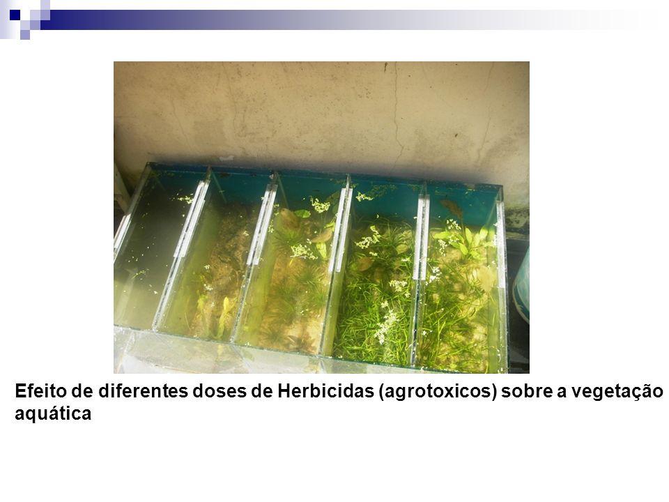 Efeito de diferentes doses de Herbicidas (agrotoxicos) sobre a vegetação