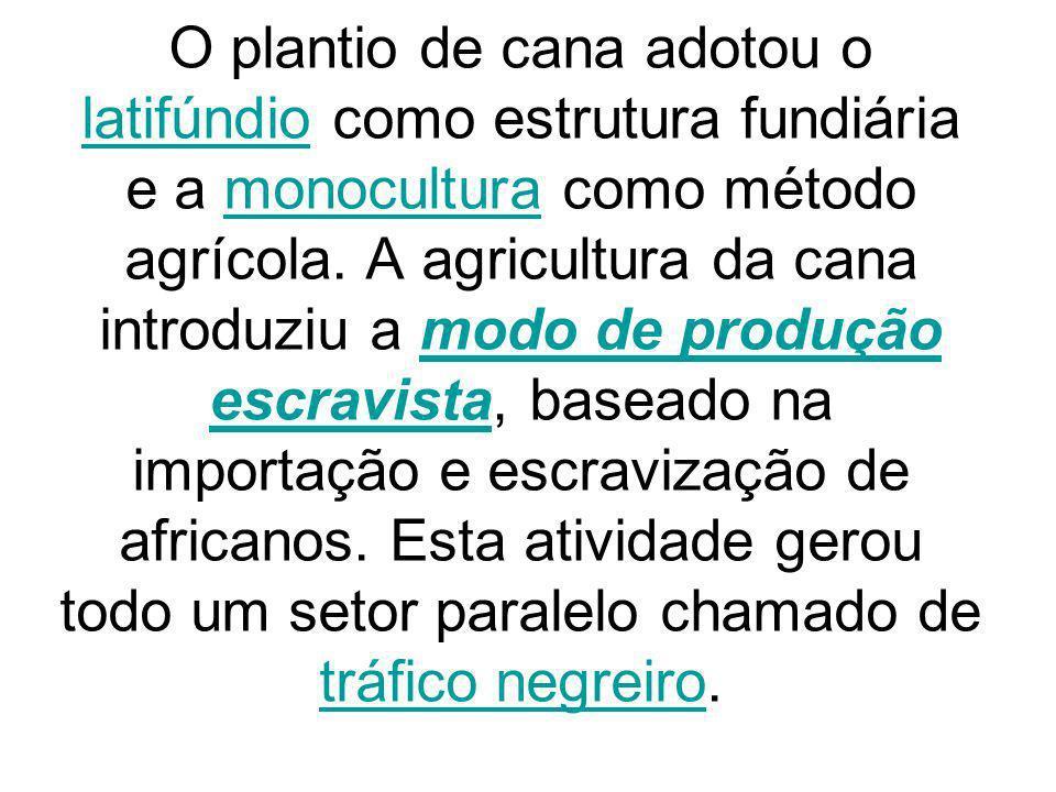 O plantio de cana adotou o latifúndio como estrutura fundiária e a monocultura como método agrícola.