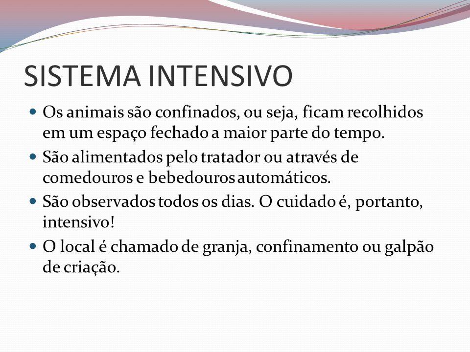SISTEMA INTENSIVOOs animais são confinados, ou seja, ficam recolhidos em um espaço fechado a maior parte do tempo.
