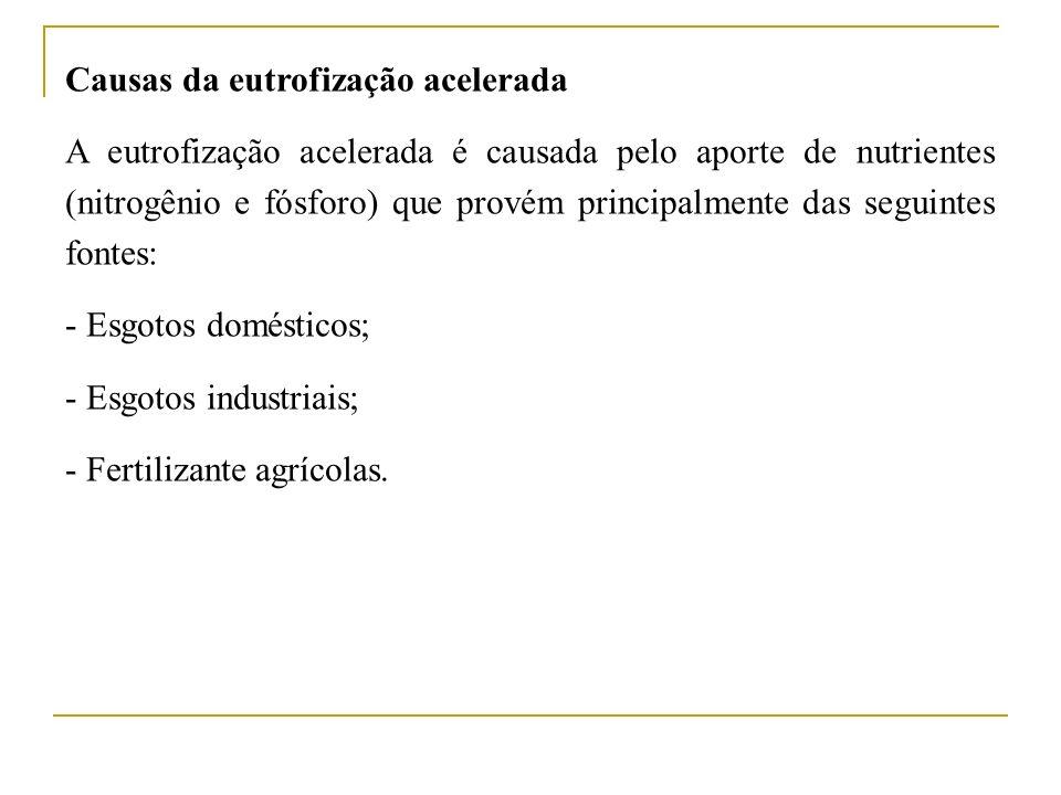 Causas da eutrofização acelerada